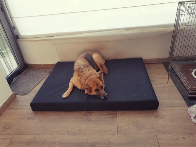 Extreem sterk hondenkussen
